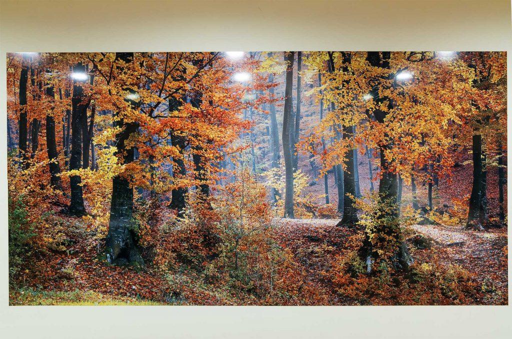 Mural-bosque-sublimado
